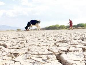 La sequía que normalmente se produce entre febrero y marzo afecta en gran medida a los productores ganaderos.