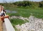 Este afluente se ve amenazado cada día y su pronóstico de vida es cada vez más limitado. Las aguas del río Yaque del Norte irrigan las tierras agrícolas de Villa González,  Esperanza, Jaibón, Hatillo Palma y otros pueblos de la Línea Noroeste.