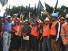 Empleados de Falcondo protestan frente al Palacio Nacional.