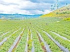 El Gobieno busca el desarrollo del agro.