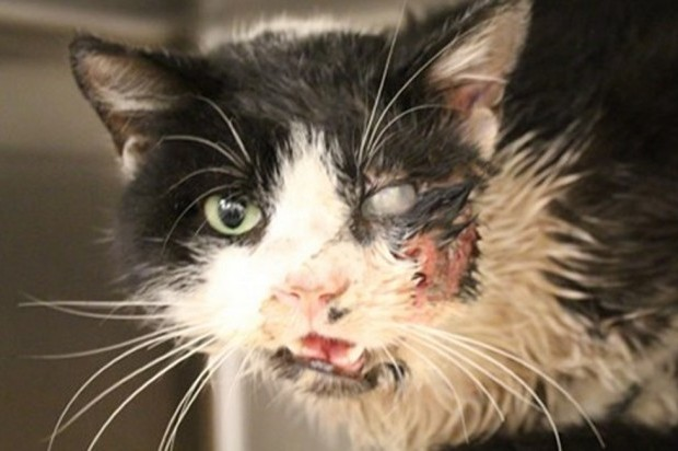 Un gato demuestra que tiene siete vidas tras salir de la tumba